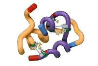 Insulin mRNA to Protein Kit<sup>©</sup>