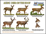Aging Deer on the Hoof - IMAGE DOWNLOAD