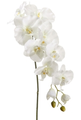 Natural Touch Phalaenopsis Orchid Spray Stem