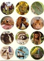 Alephbet Animals - 24/sheet - 5 pack