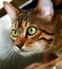 Feline Behaviour and Psychology - Diploma - CPD