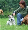 Advanced Diploma in Canine Behaviour Management