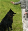 Canine Care, Nutrition and Behaviour - Diploma