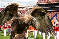 War Eagle on the Field