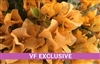 BOUGAINVILLEA V F TOPAZ GOLD-Gold Blooms Green Foliage-Tropical 9+
