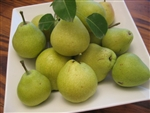 PEAR TREE KIEFFER— Pyrus communis-Zones 4-9 Chill: 200-300 HRS