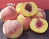 OUT OF STOCK   FAIRTIME PEACH--Prunus persica USDA Zones 6 Chill: 700 hrs