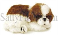 Shih Tzu Perfect Petzzz SaltyPaws.com