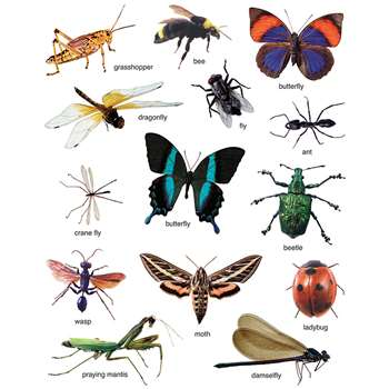 Insects: Photographic By Carson Dellosa