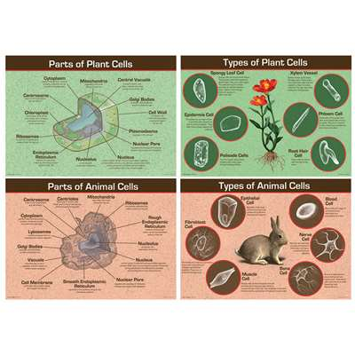 Animal & Plant Cells Bulletin Board Set By Carson Dellosa