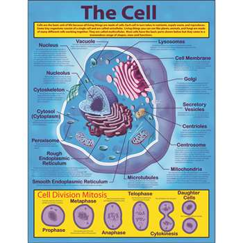 The Cell Chartlet By Carson Dellosa