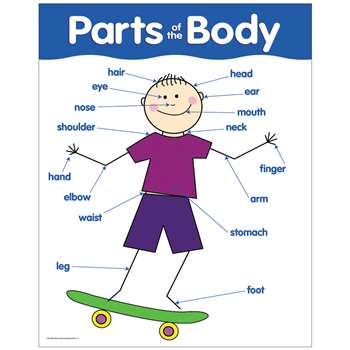 Chart Parts Of The Body By Creative Teaching Press