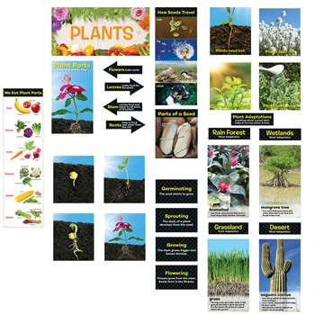 Plants Mini Bulletin Board St Gr K-2, CTP6988