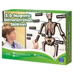 Hands On 3D Magnets Skeletal System By Educational Insights