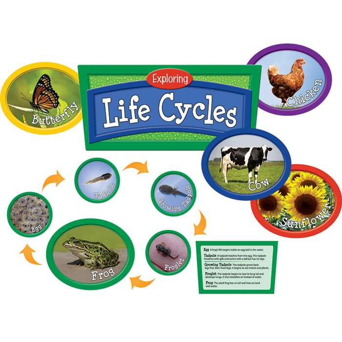 Exploring Life Cycles Bulletin Board Set By Edupress