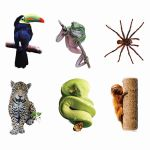 Rainforest Animals Bulletin Board Accents, EP-3114R