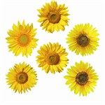 Sunflowers Accents By Edupress