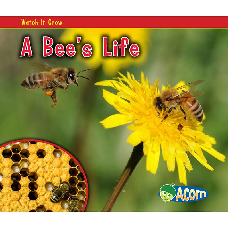 A Bees Life by Coughlan Publishing Capstone Publishing: Science ...