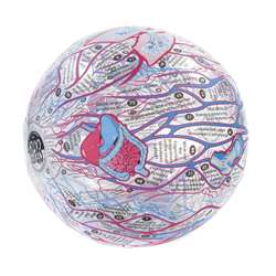 Human Anatomy Clever Catch Ball By American Educational