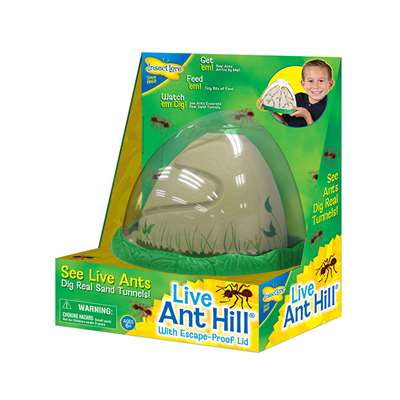 Anthill By Insect Lore
