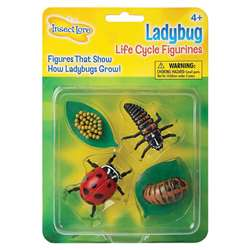 Ladybug Life Cycle Stages By Insect Lore