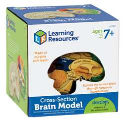 Human Brain Crosssection Model By Learning Resources