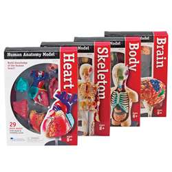 Model Anatomy Bundle Set Of 132 By Learning Resources