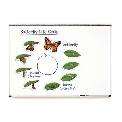 Giant Magnetic Butterfly Life Cycle By Learning Resources