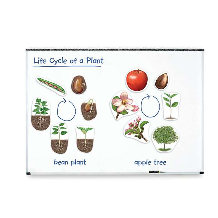 Giant Magnetic Plant Life Cycles By Learning Resources