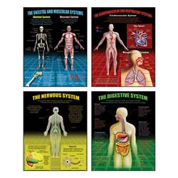 The Human Body Teaching Poster Set By Mcdonald Publishing