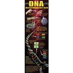 Dna Colossal Poster By Mcdonald Publishing