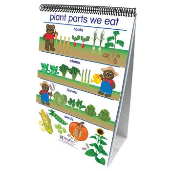 Flip Charts All About Plants Early Childhood Science Readiness By New Path Learning