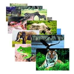 Wild Animal Poster Set Set Of 10 By Stages Learning Materials