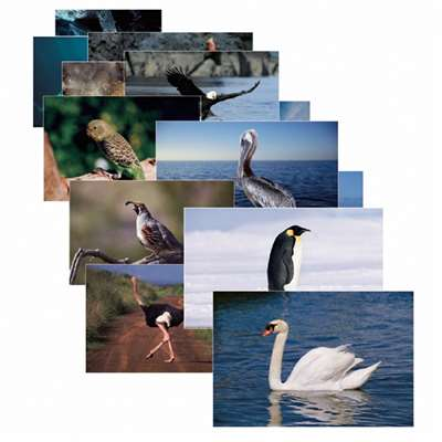 Birds 14 Poster Cards By Stages Learning Materials