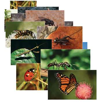 Insects 14 Poster Cards By Stages Learning Materials