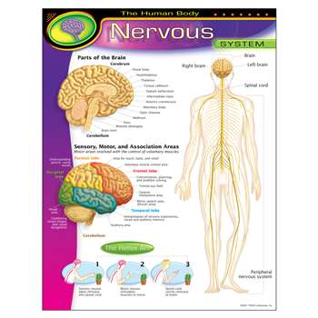 Chart Nervous System By Trend Enterprises