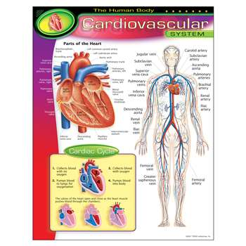 Chart Cardiovascular System By Trend Enterprises