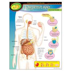 Chart Digestive System By Trend Enterprises