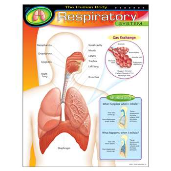 Chart Respiratory System By Trend Enterprises