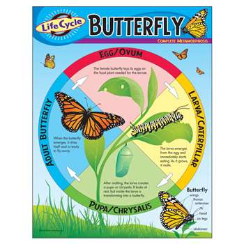 Chart Life Cycle Of A Butterfly By Trend Enterprises
