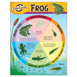 Chart Life Cycle Of A Frog By Trend Enterprises