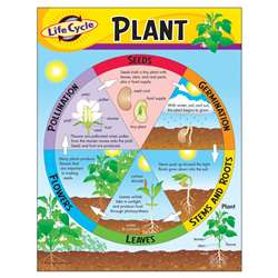 Chart Life Cycle Of A Plant K-3 By Trend Enterprises