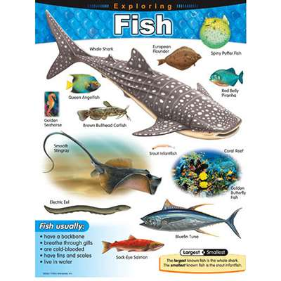 Chart Exploring Fish Grades 1-5 By Trend Enterprises