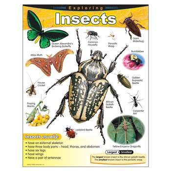 Chart Exploring Insects Grades 1-5 By Trend Enterprises