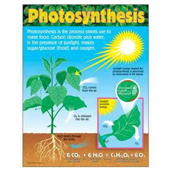Chart Photosynthesis Grades 4-8 By Trend Enterprises