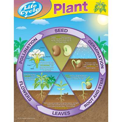 Life Cycles - From Seed To Plant Chart By Teacher Created Resources