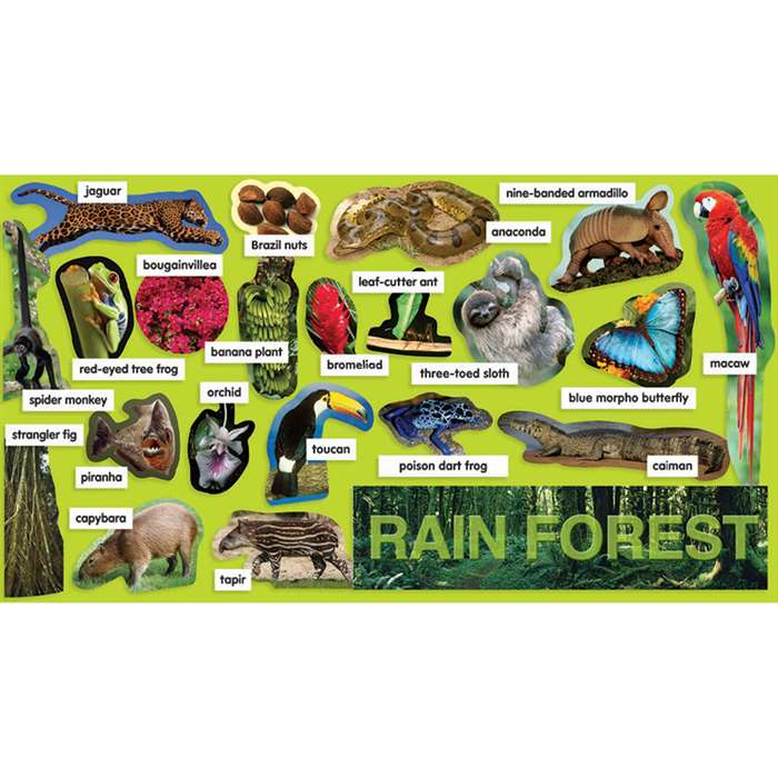 Rainforest Plants & Animals Mini Bulletin Board Set Gr Pk-5 By Teachers Friend