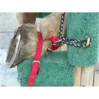 Replacement Straps and Ropes for Shoeing Stocks | Yoder's Horseshoeing Stocks, Ohio