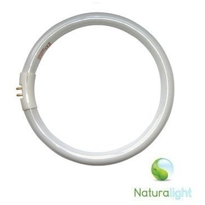 22w Naturalight Energy Saving Circular Tube by The Daylight Company (UN0002)