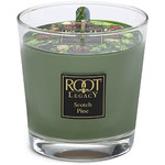 Root Candles - Scotch Pine Candle 6.3 oz. (308988)